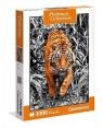 CLEMENTONI 39429 puzzle 1000 platinum coll - tigre #87802